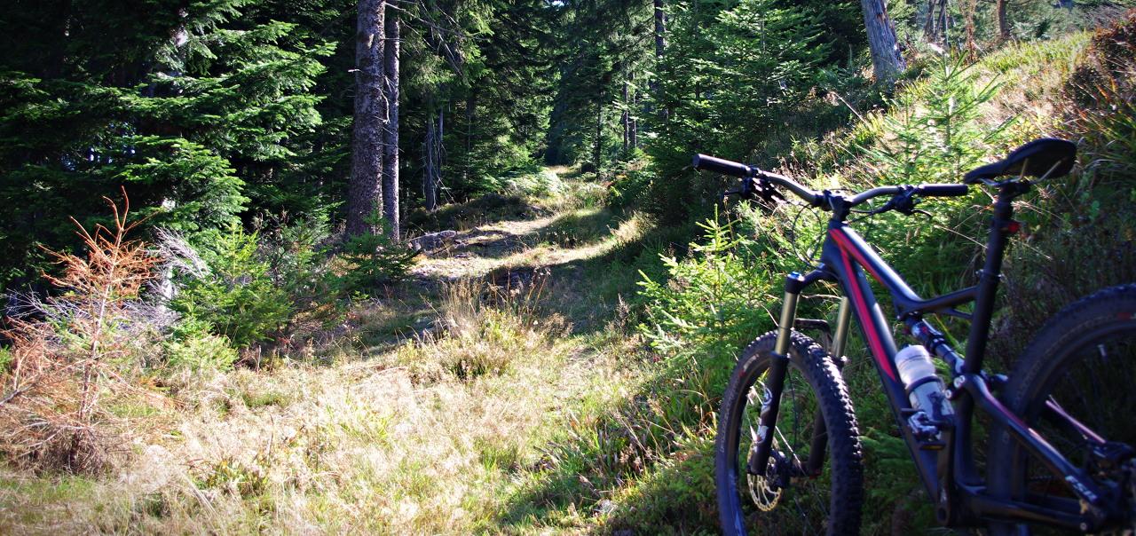 6Fattie im Schwarzwald