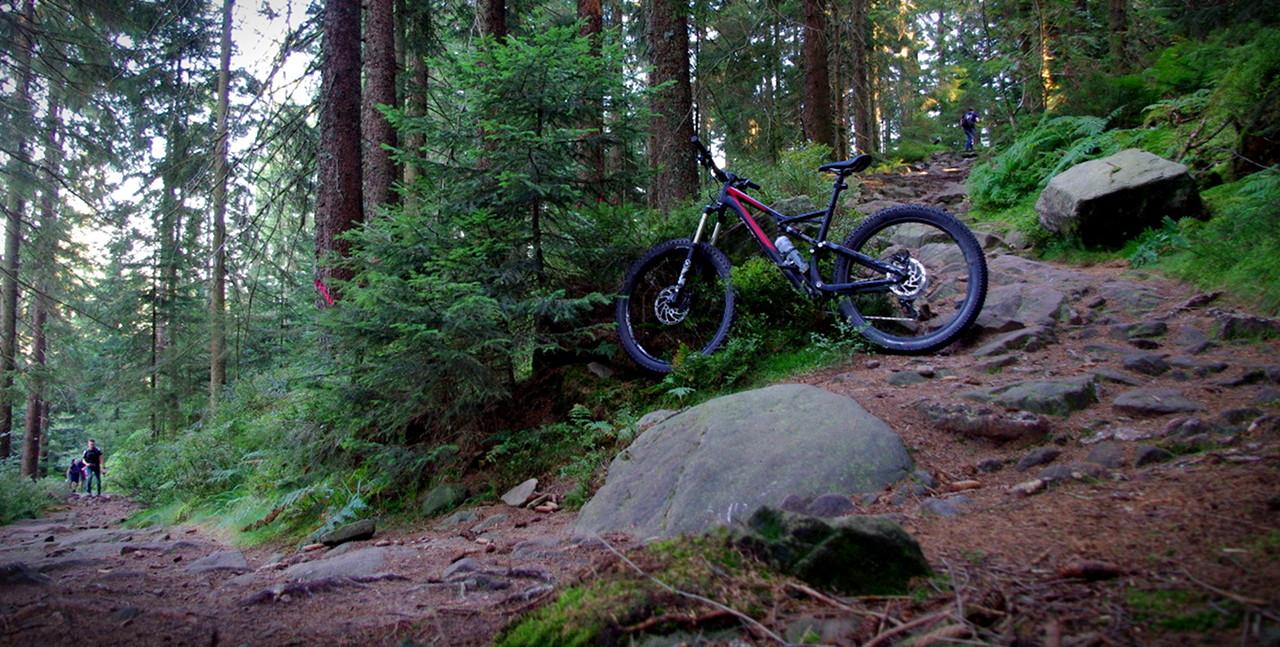 Steiniger Trail